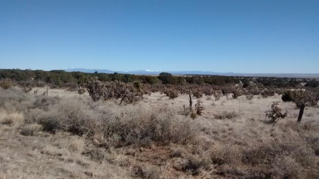 lookng to Pecos near Cedar Grove