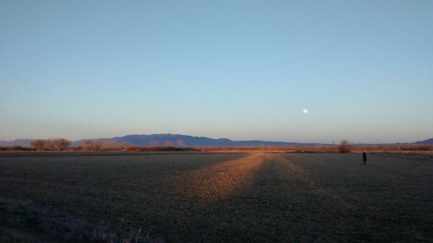 Mai in field
