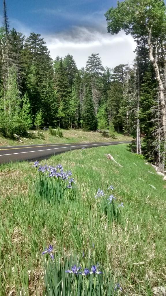 Crest road