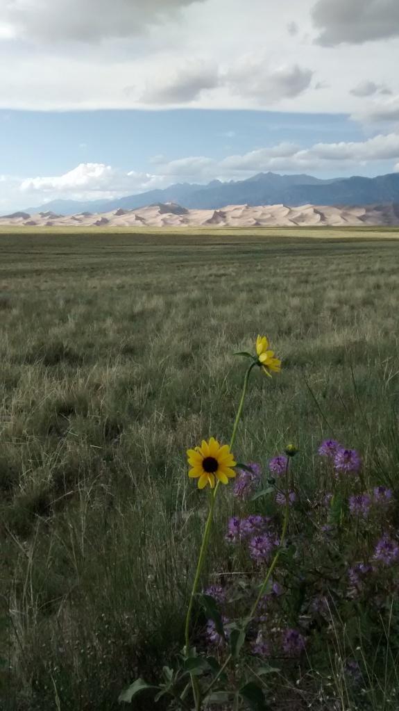 prairie sunflower landlord