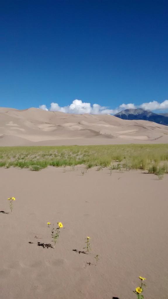 prairie-sunflower-trail