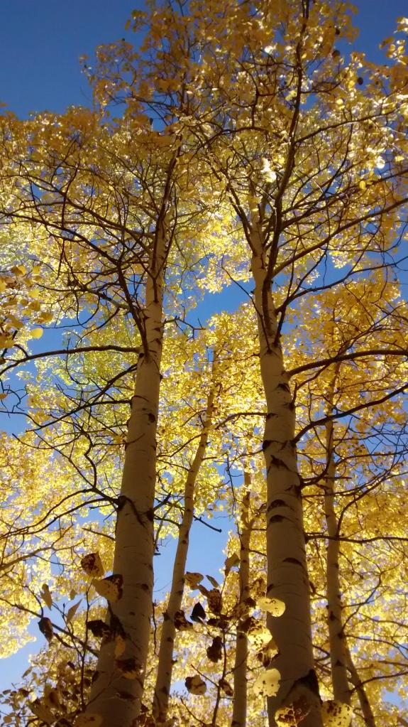 santa-fe-tree-family