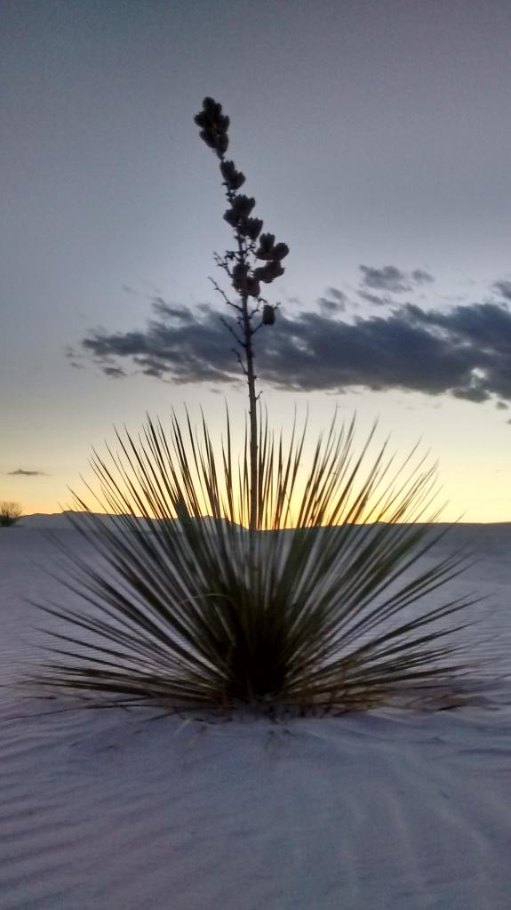 white-sands-yucca-crystal-light