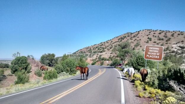 placitas-horse-gang