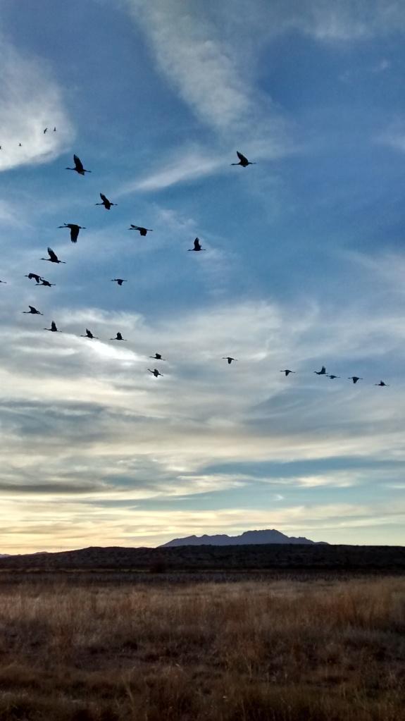 bernardo-cranes